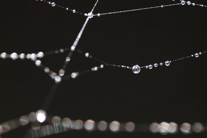 Dew_of_web