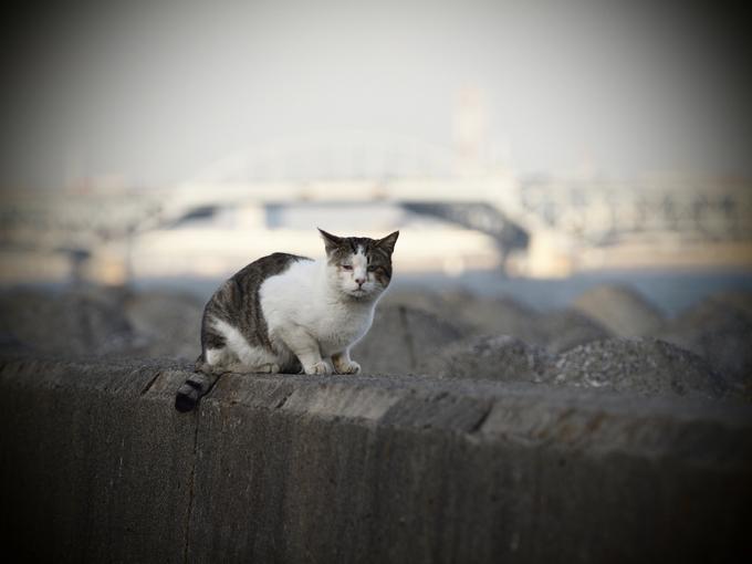 Wakasu_cat_toy