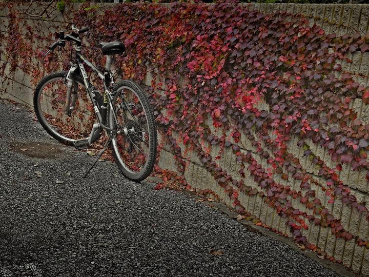 Fall_wall